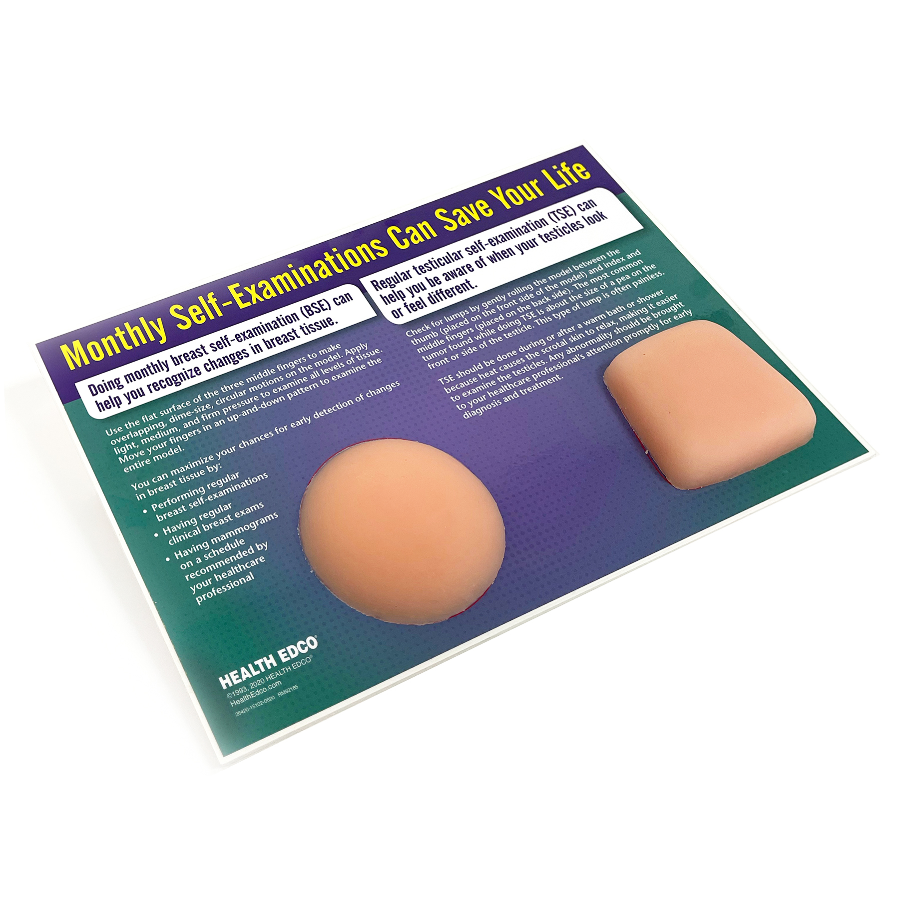 testicular self-examination, front