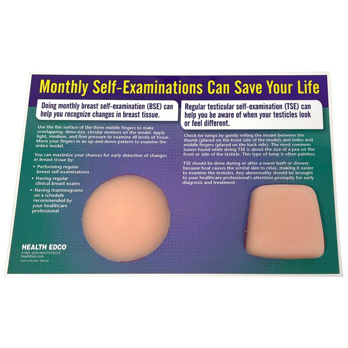 Nonsexual BSE / TSE Model, Health Edco breast self-exam and testicular self-exam palpable health education models, 26420