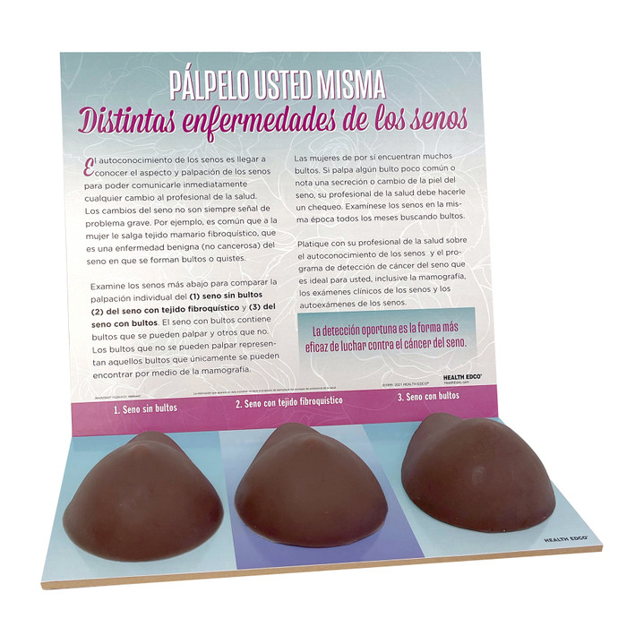 Multi Type BSE Model, Brown, three brown breast health education models with Spanish informational display background, 26427