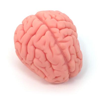 brain model, soft realistic brain model, Health Edco, 27015
