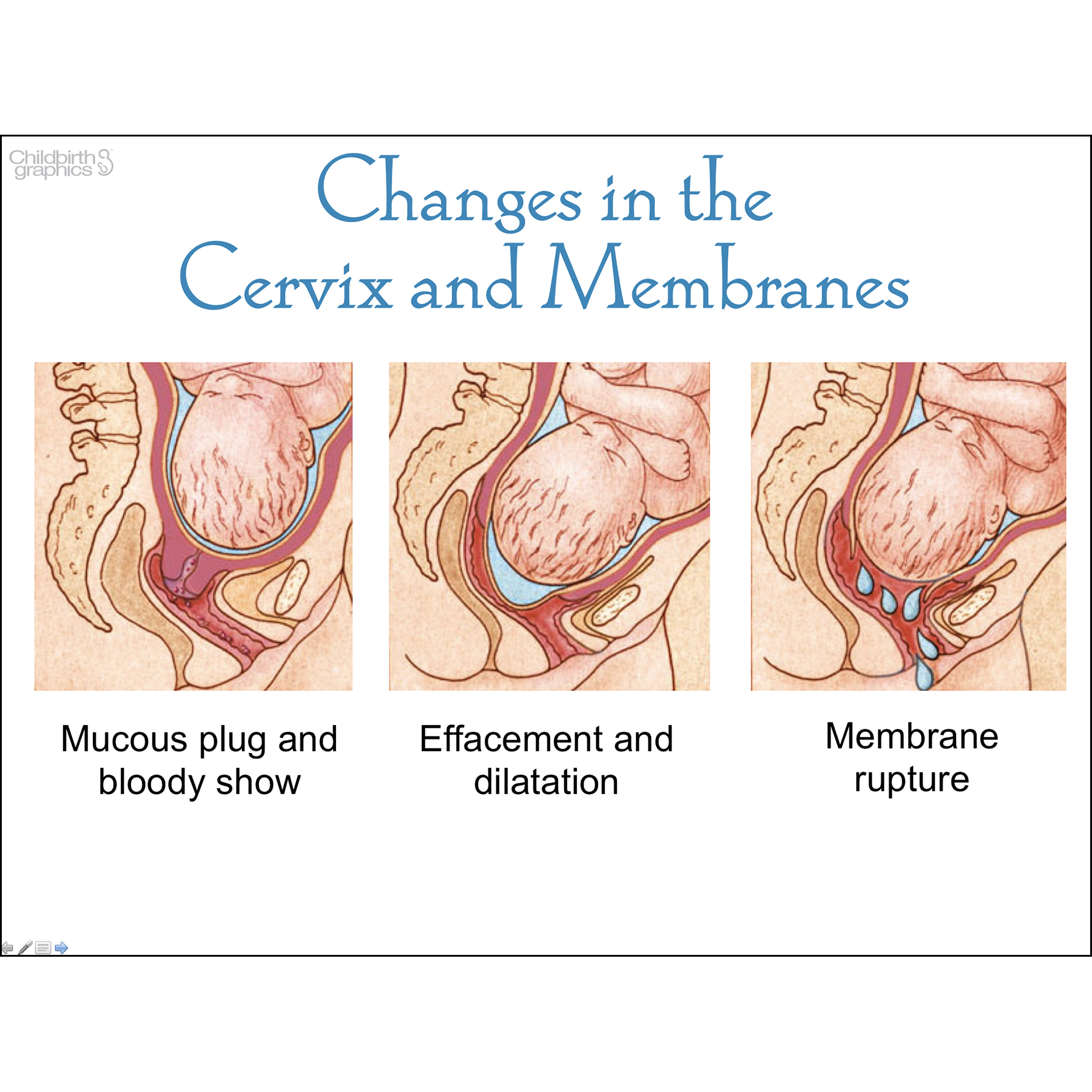 With Child Pregnancy Powerpoint Childbirth Graphics