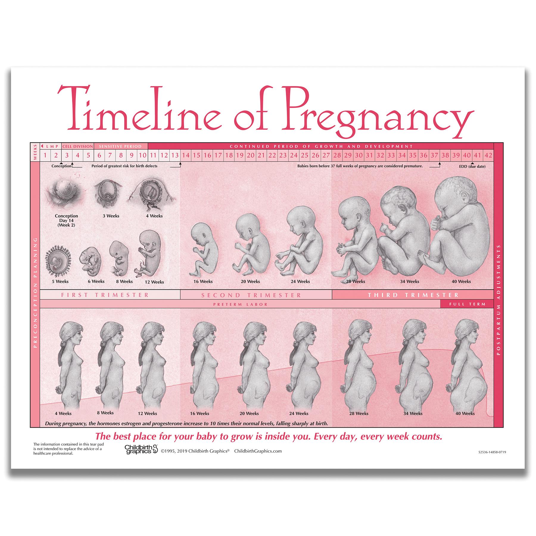 Timeline of Pregnancy Chart