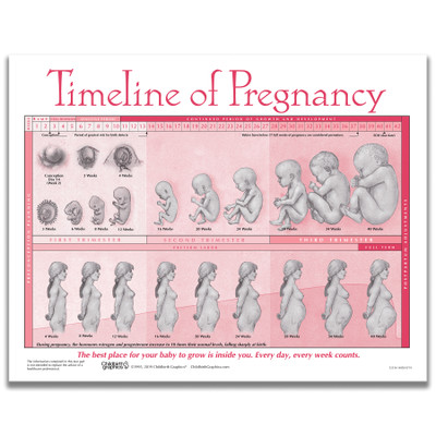 Timeline of Pregnancy tear pad from Childbirth Graphics depicting fetal development over 40 weeks of pregnancy, 52536