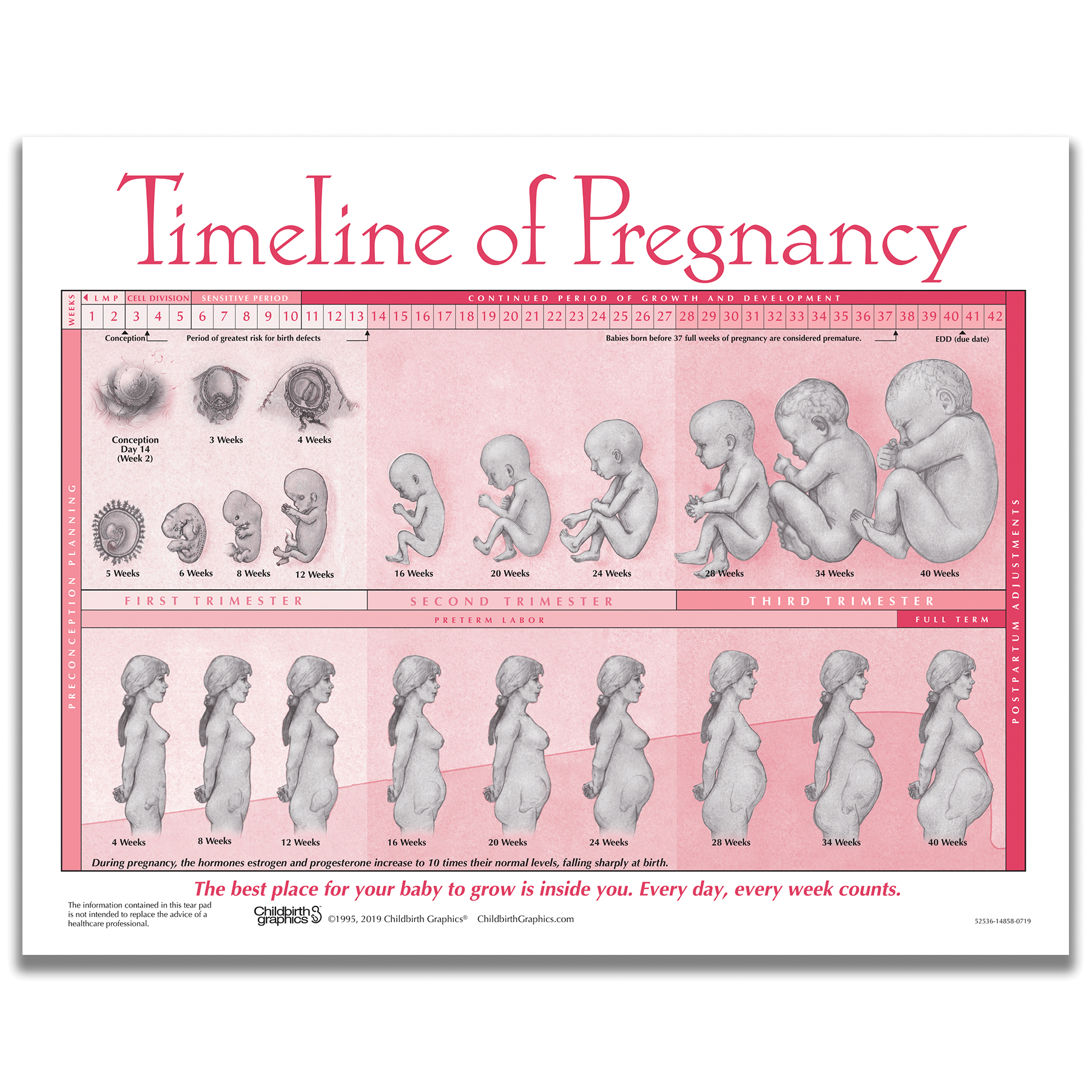 Timeline of Pregnancy 2-color illustrated tear pad side one, fetal development and pregnant torso, Childbirth Graphics, 52536