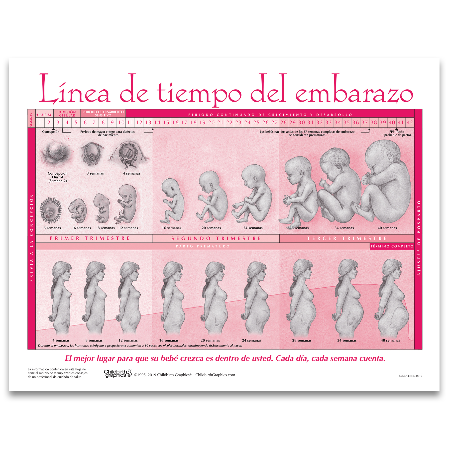 Timeline of Pregnancy childbirth education tear pad in Spanish from Childbirth Graphics showing fetal development, 52537