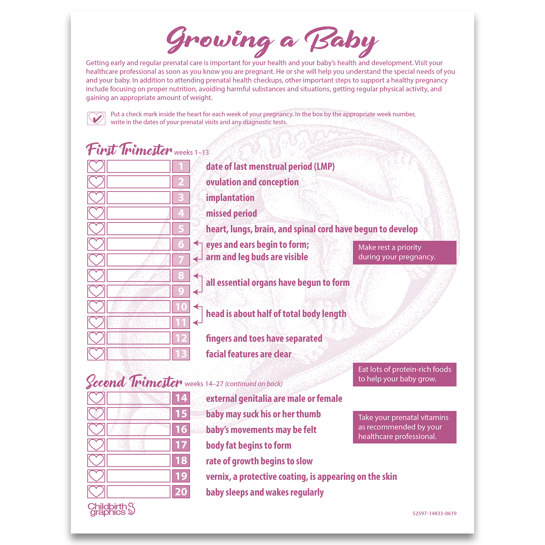 conception to birth folding display childbirth graphics