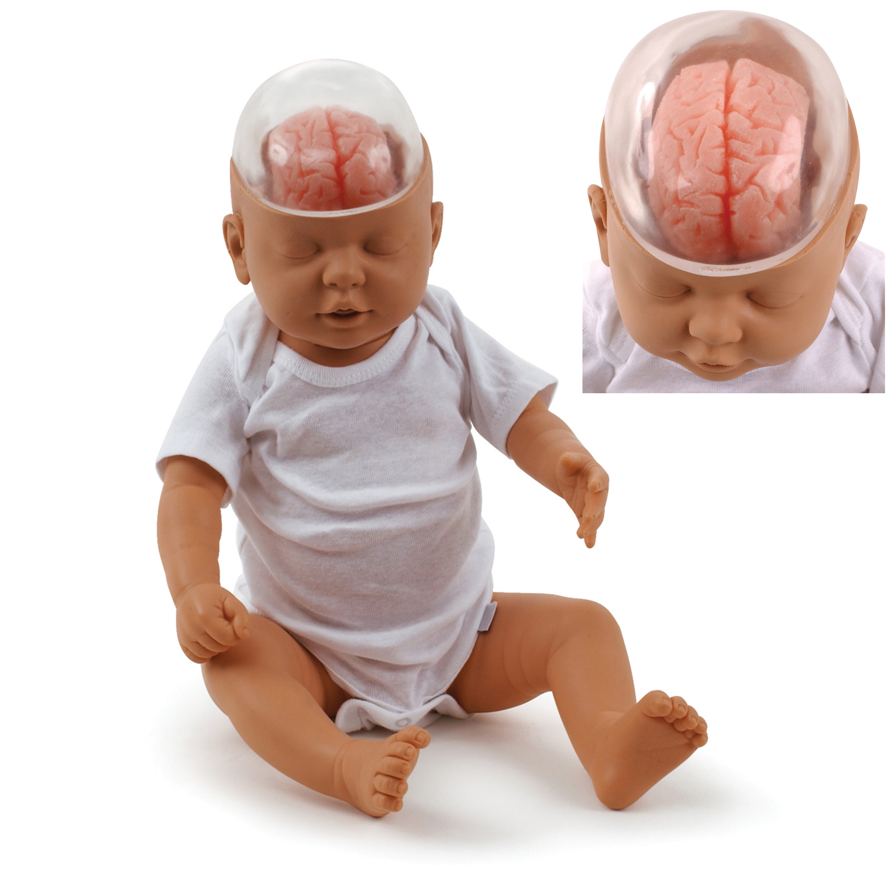 Shaken Baby Demonstration Model, beige baby doll wearing onesie with clear plastic head & pink brain inside, Health Edco, 53501