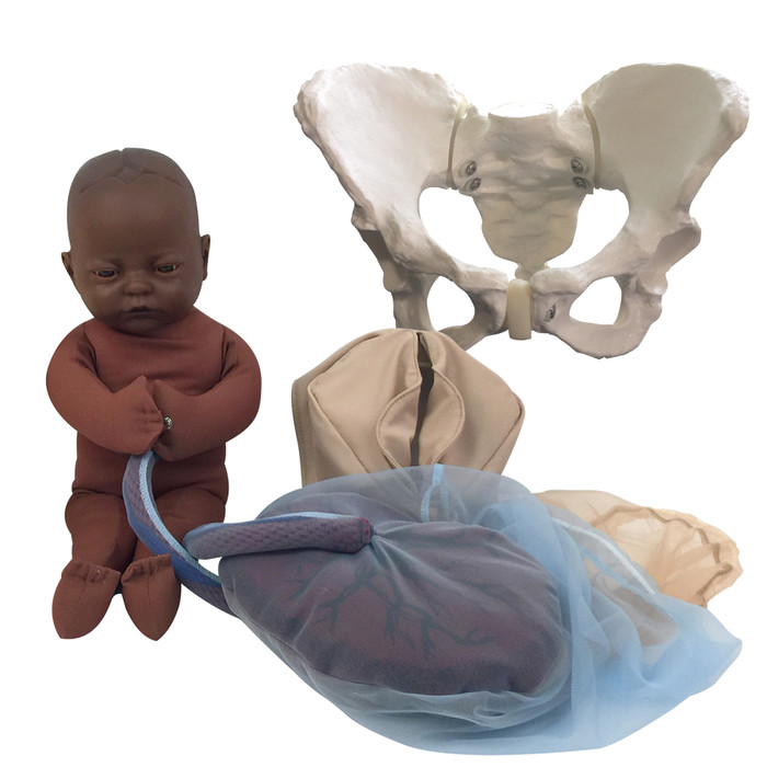 Childbirth Model Set with dark brown skin tone fetal model, pelvis, perineal, and placenta models, Childbirth Graphics, 78015