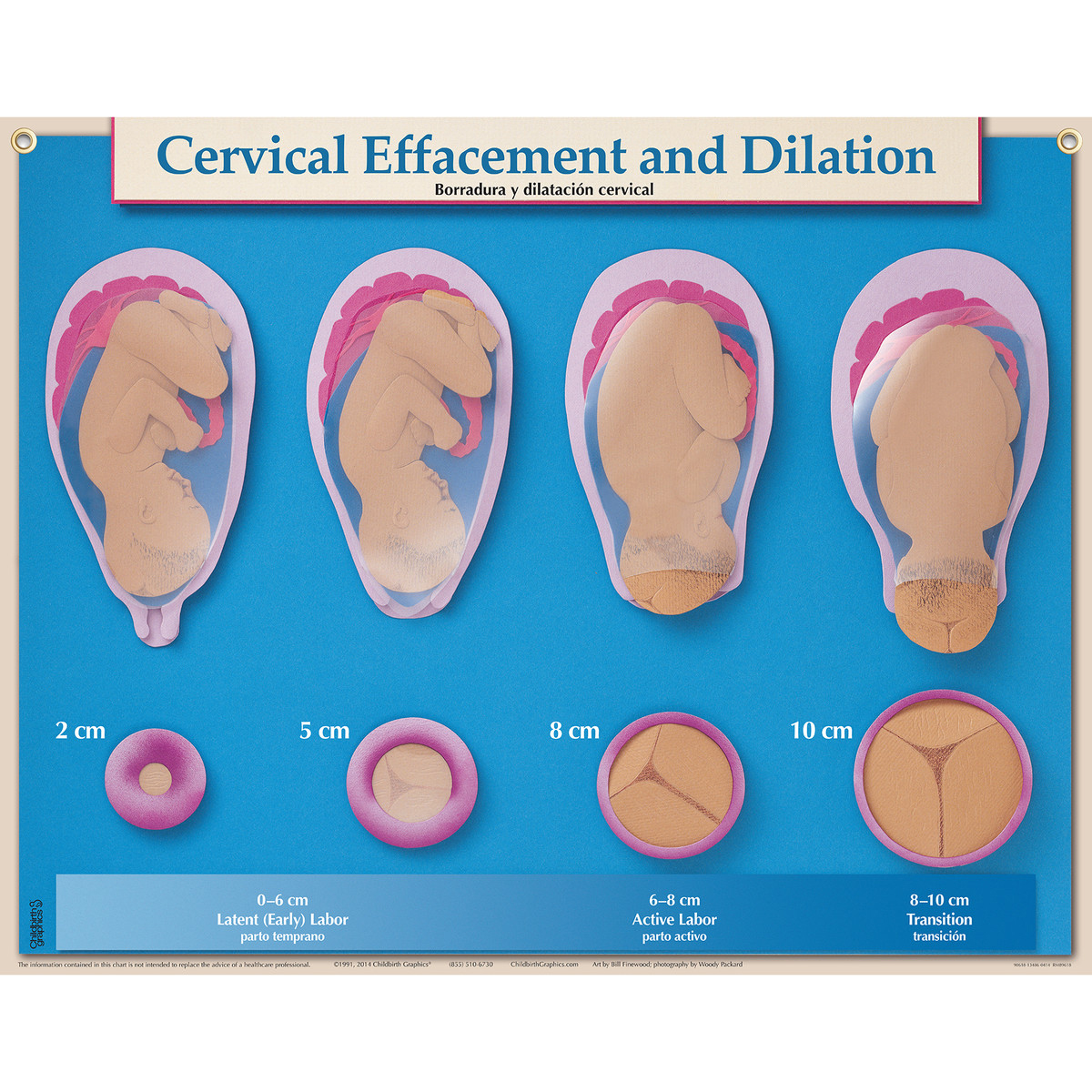 Six Essential Labor & Birth Charts   Childbirth Graphics