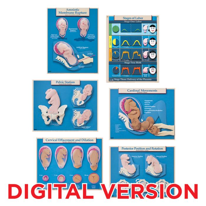 Six Essential Labor & Birth Charts, English Spanish, Virtual, digital Childbirth Graphics childbirth education charts, 90630V