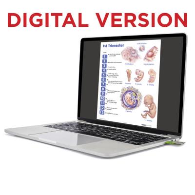 Four Trimesters of Childbearing Charts, Virtual, digital childbirth education charts by Childbirth Graphics, 90649V