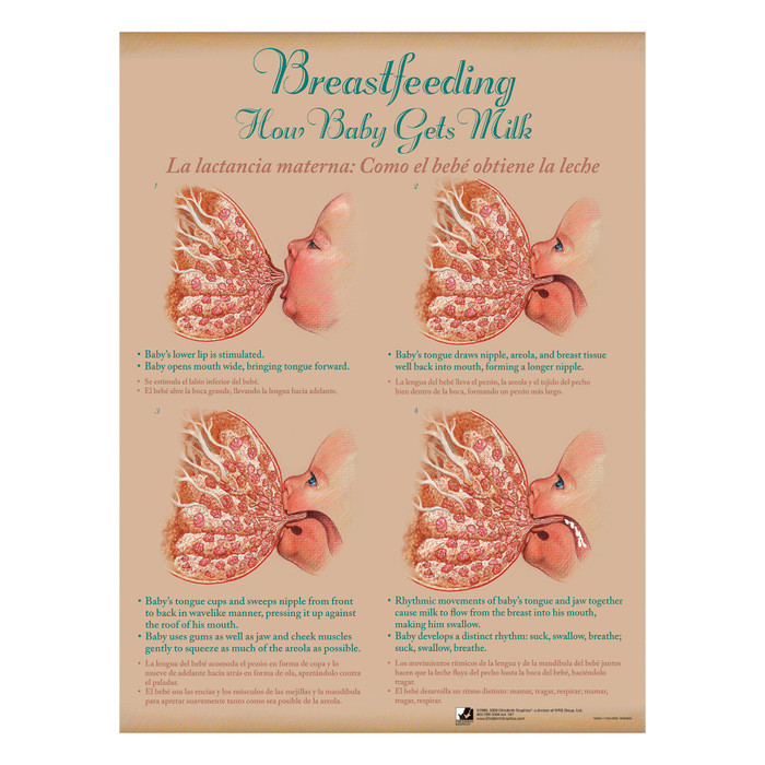 Breastfeeding Chart Set (8), illustrated how baby gets milk in 4 steps, Childbirth Graphics, 90809